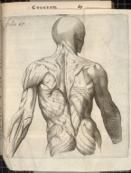 [muscles of the upper body]