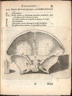 [plate showing the interior of the front of the skull]