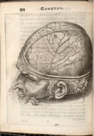 [dissection of the cranial contents]