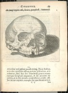 [anterior aspect of the skull]