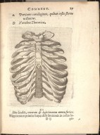 [anterior aspect of the rib cage]