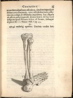 [bones of the lower leg and foot]