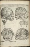 Prima pagina figuram capitalium