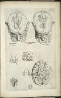 Tertia pagina figurarum capitalium
