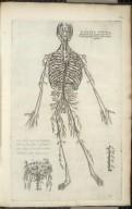 Tertia figura integram totius magnae arteriae ab omnibus partibus libere delineationem monstrat