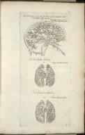 Sexta fig: venarum pariter ac arteriarum cerebri seriem, explicat, [and] venae arterialis delineatio, [and] arterie venalis procelsus