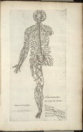 Septima nervorum tabula; Octava nervorem tabula