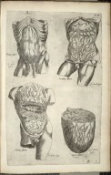 Prima figura, Secunda figura, Tertia figura, Quarta figura