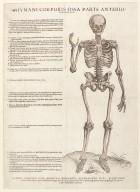 Humani corporis ossa parte anteriori expressa