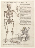 Skeleton a tergo delineatum