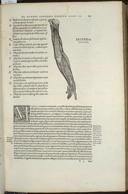 Muscle. Caput II. Fig.II.