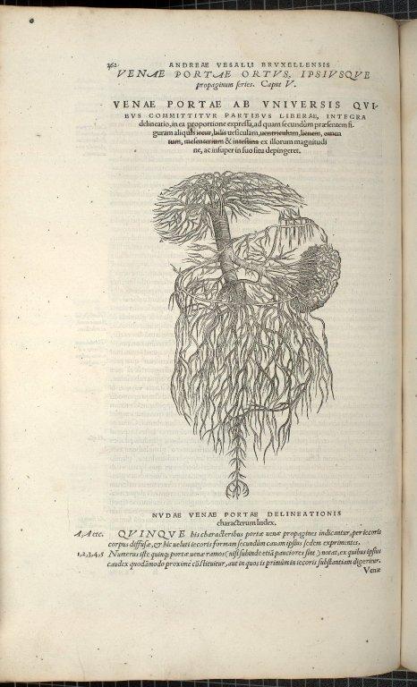 Venae Portae Ortus, Ipsiusque propaginum feries. Caput V.