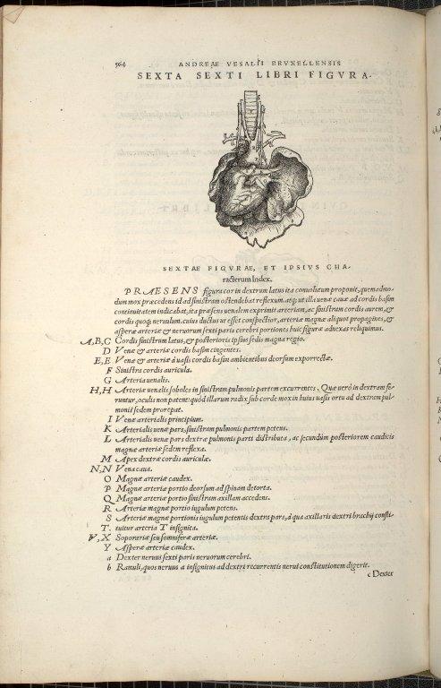 Sexta Sexti Libri Figura.