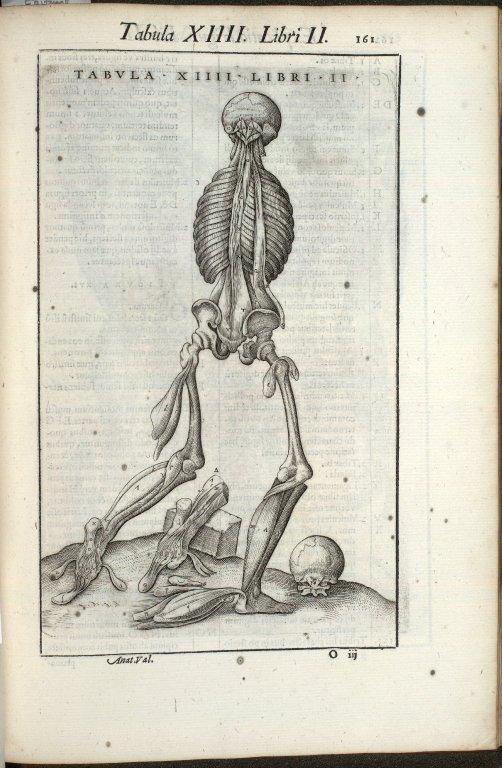 Tabula XIIII. Libri II.