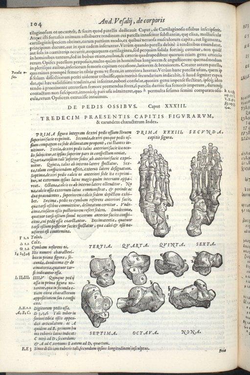 De Pedis Ossibus. Caput XXXIII. Fig.I-IX