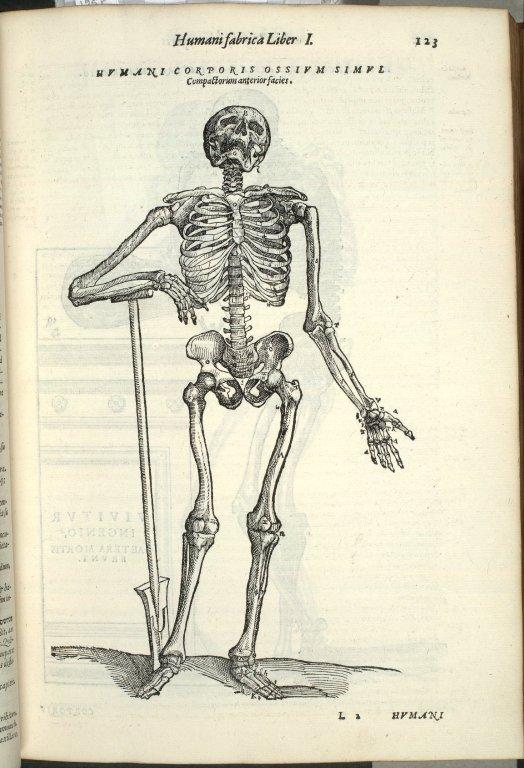 Humani Corporis Ossium simul, compactorum anterior facies.