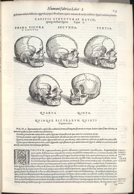 Capitis Structura Ratio, quotq; eiusdem figurae. Caput V. Fig.I-V