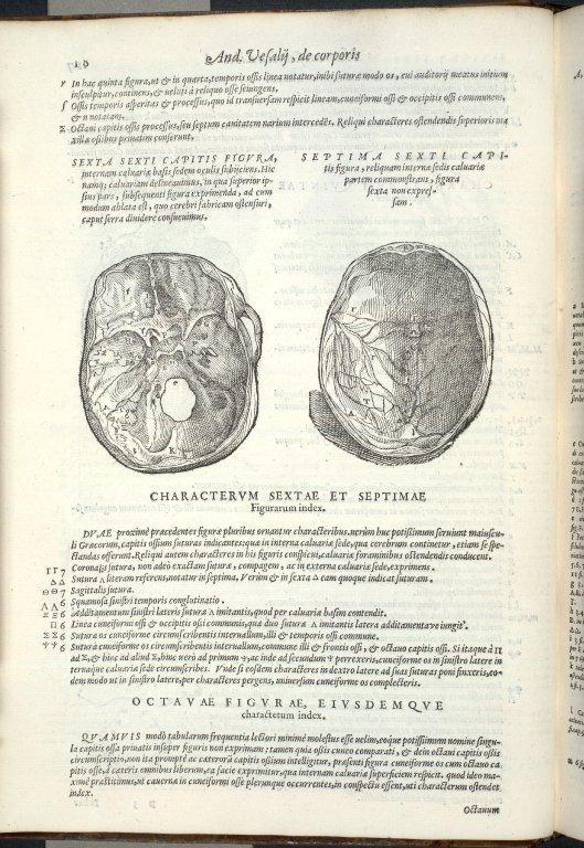 De Octo Capitis Ossibus, et Suturis, haes inuicem, & cum conterminis ipsis maxillae superioris ossibus, committentibus. Caput VI. Fig:VI-VII