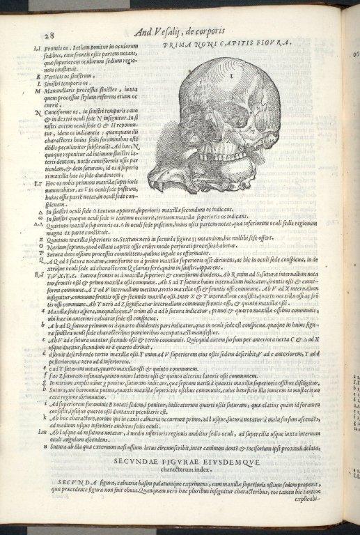 De Duodecim Superioris Maxillae ossibus, in quorum classem nasi ossa etiam referuntur, Caput IX. Fig.I