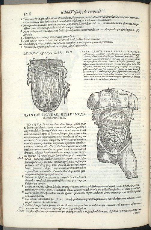 Quinta Quinti Libri Figura, Sexta Quinti Libri Figura