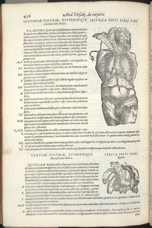 Secunda Sexti Libri Figura, Tertia Sexti Libri Figura