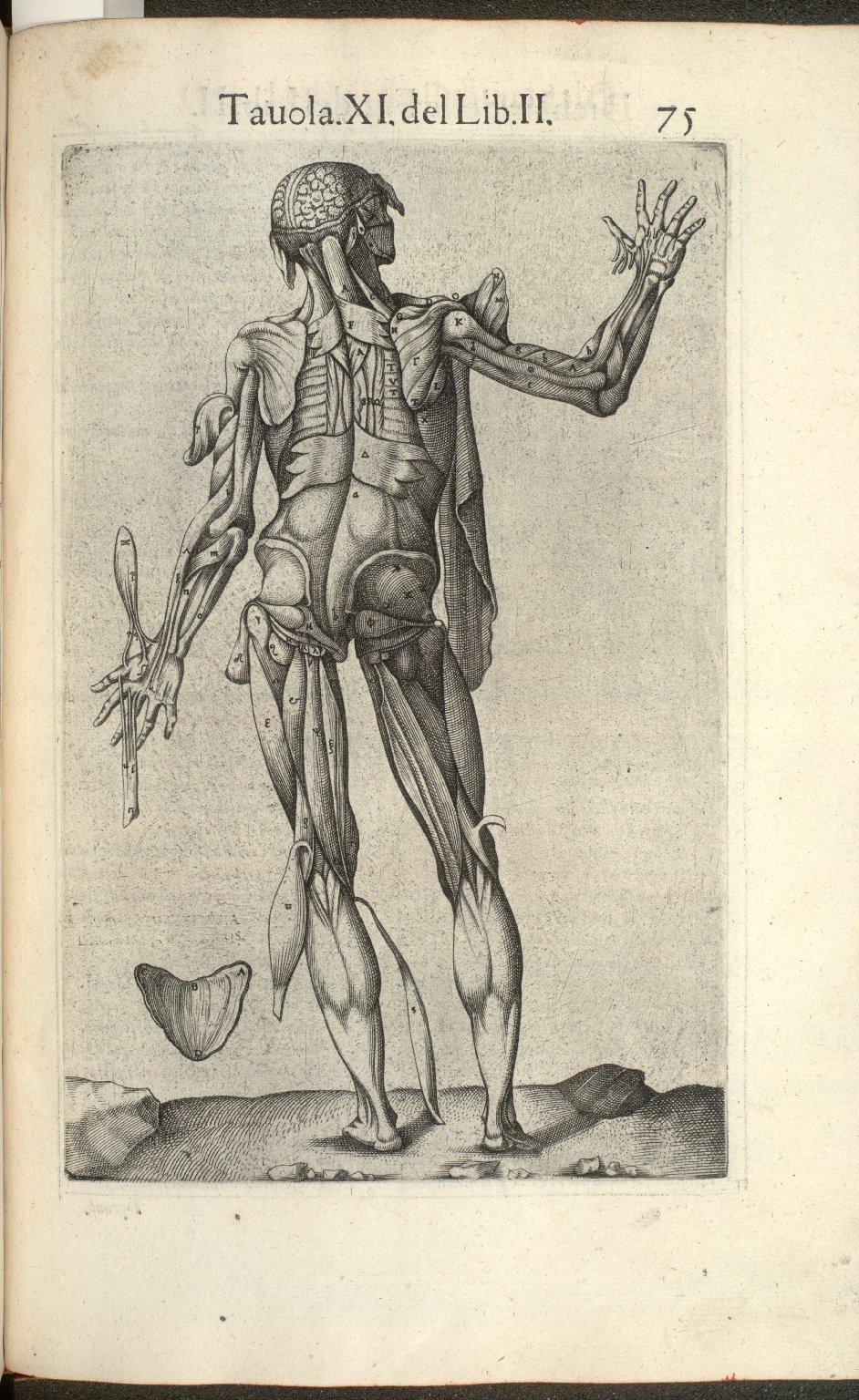 Tavola XI del Lib. II