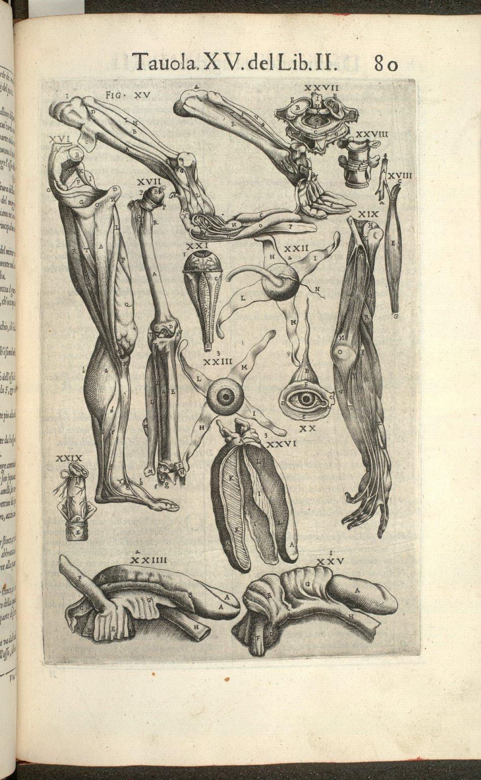Tavola XV de Lib. II