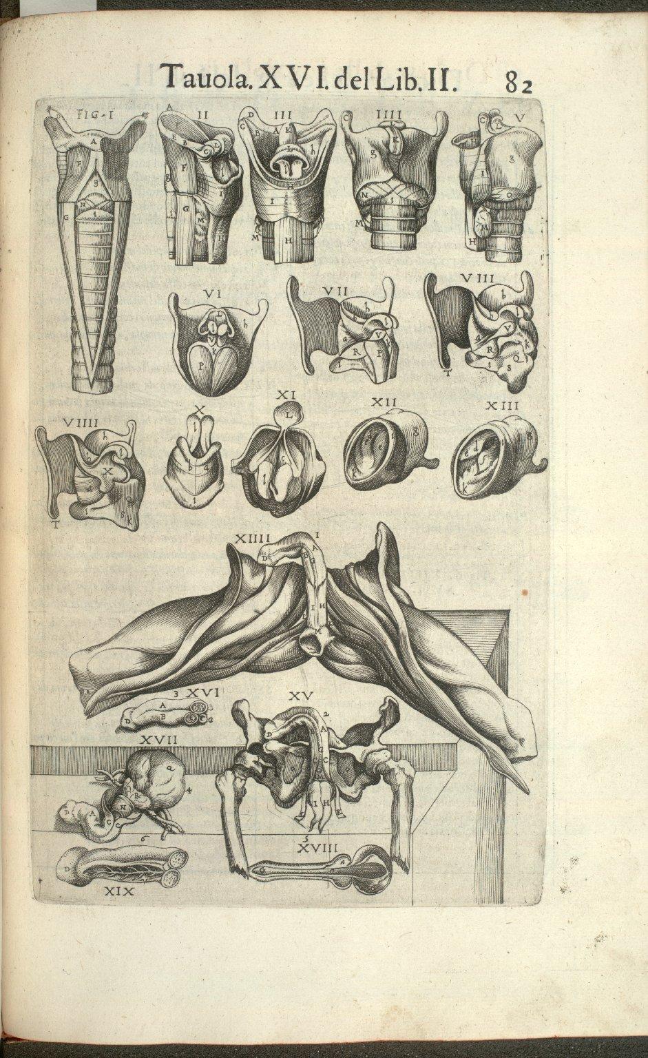 Tavola XVI del Lib. II