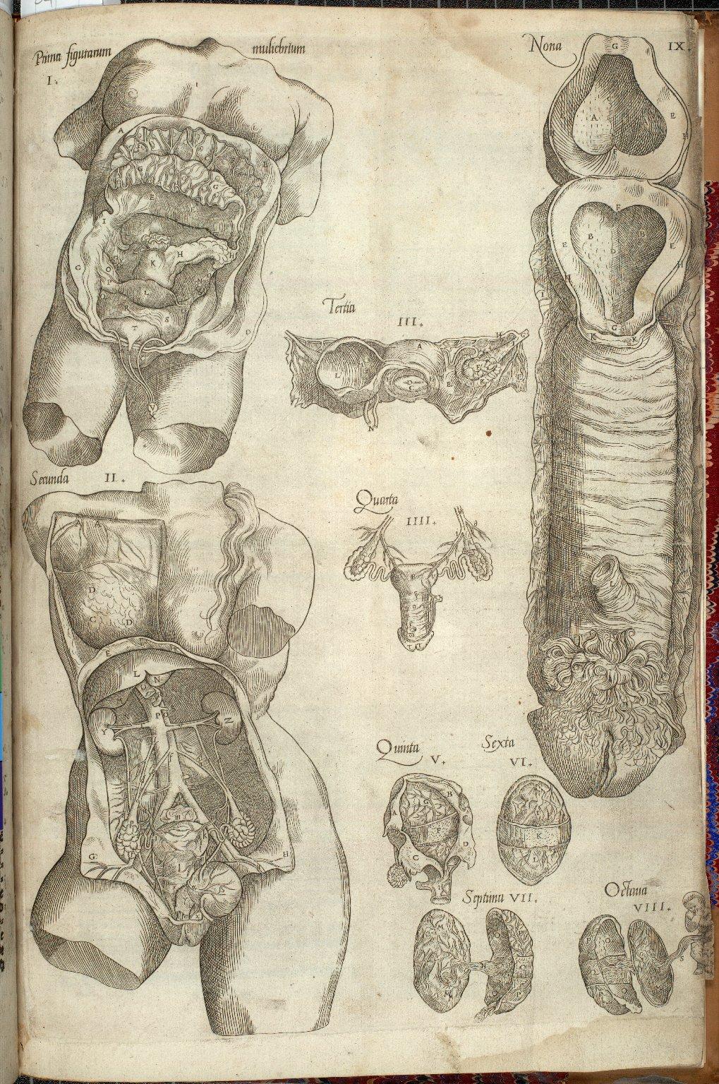 Figurae Muliebries: Prima figurarum, secunda, tertia, quarta, quinta, sexta, septima, octava, nona.