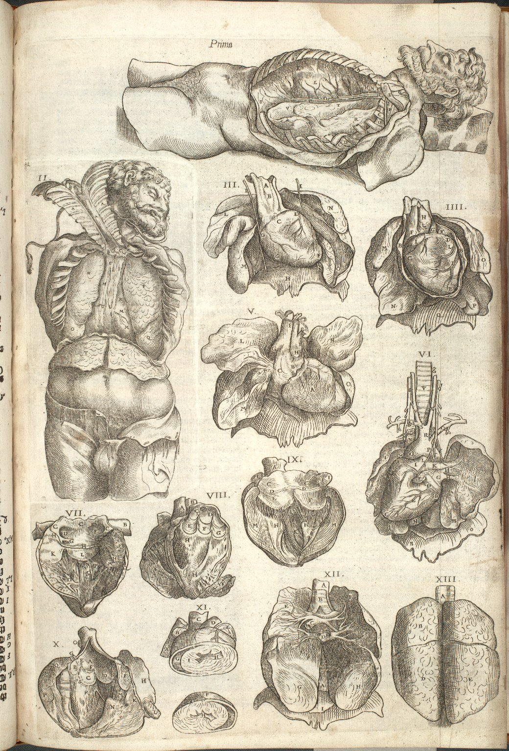 Prima, et.al. (Plates of the Organs of the Heart)