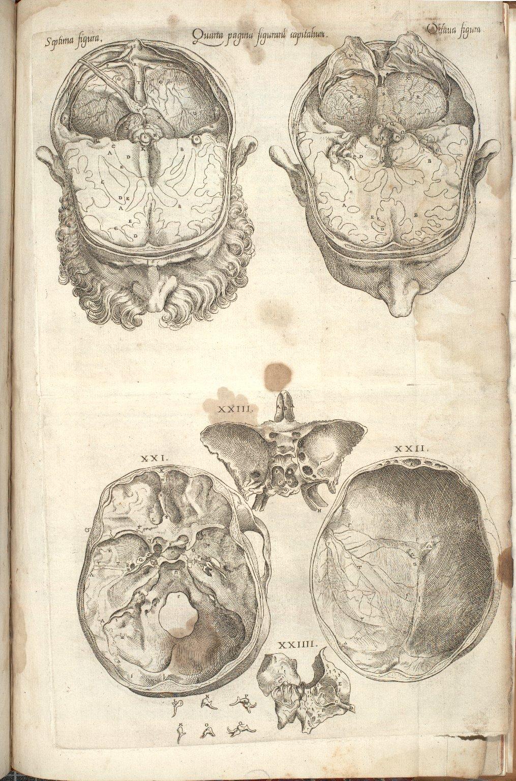 Quarta Pagina Figuraru Capitalium