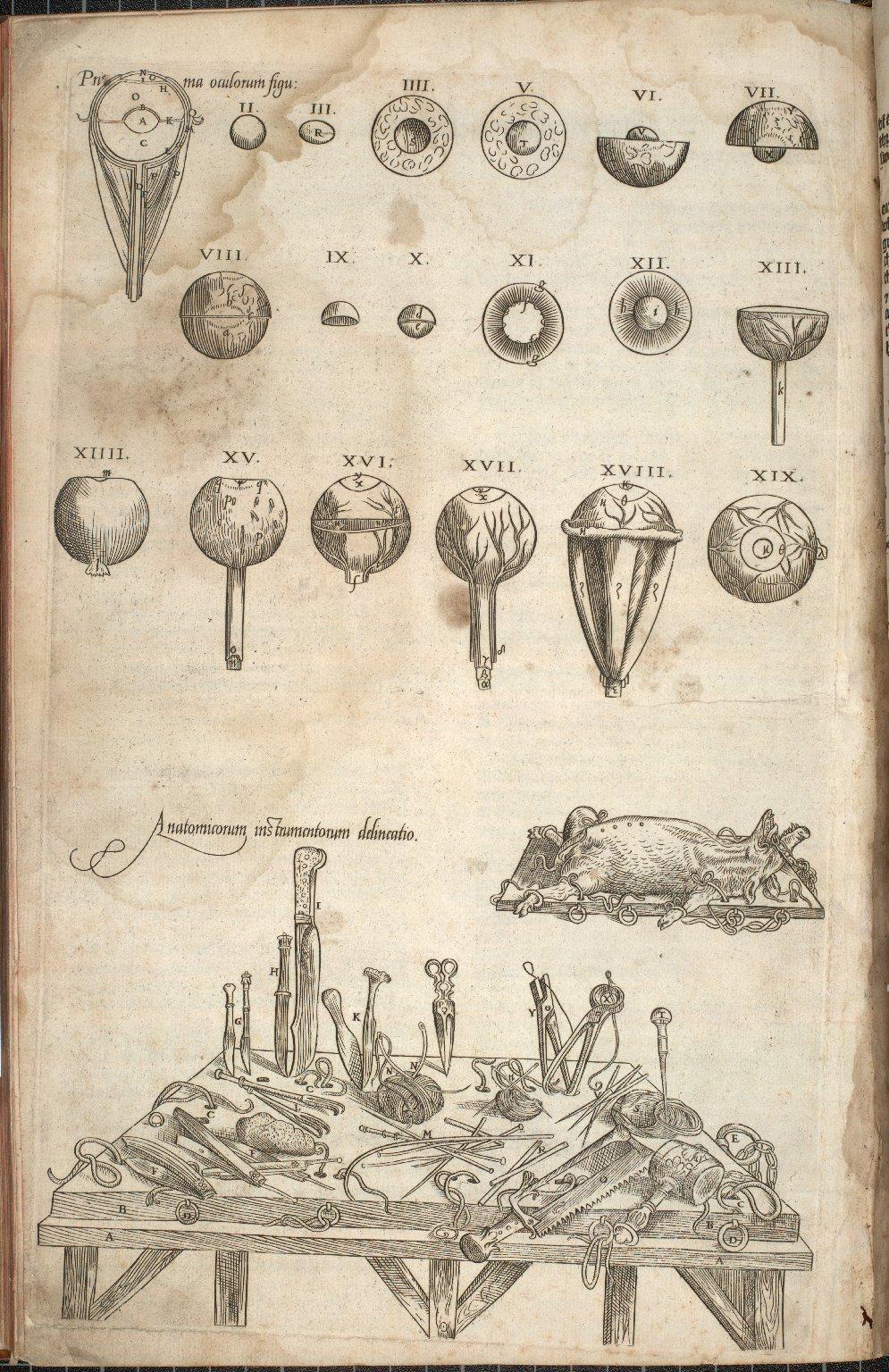 Prima Oculorum figu: [and] Anatomicorum instrumentorum delineatio