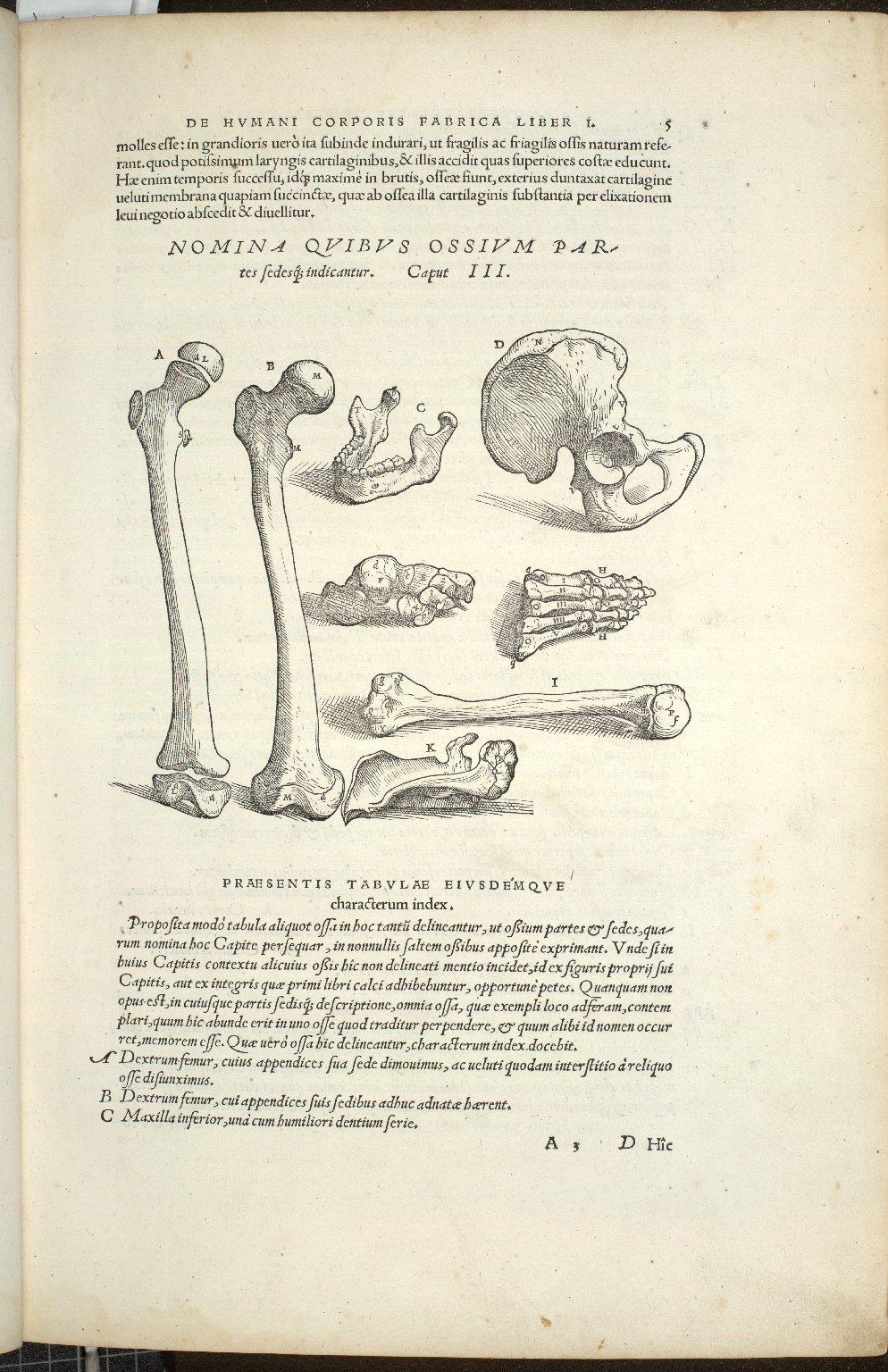 Nomina Quibus Ossium Partes sedesq; indicatur. Caput III.