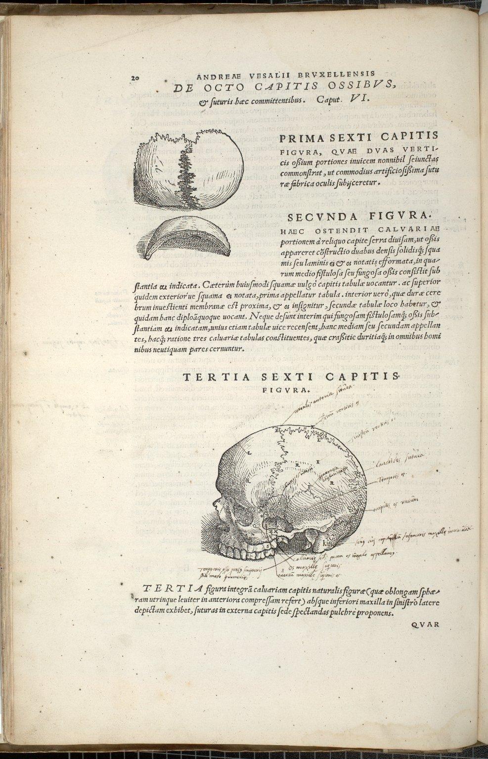 De Octo Capitis Ossibus et futuris haec commenttentibus. Caput VI. Fig.I-III