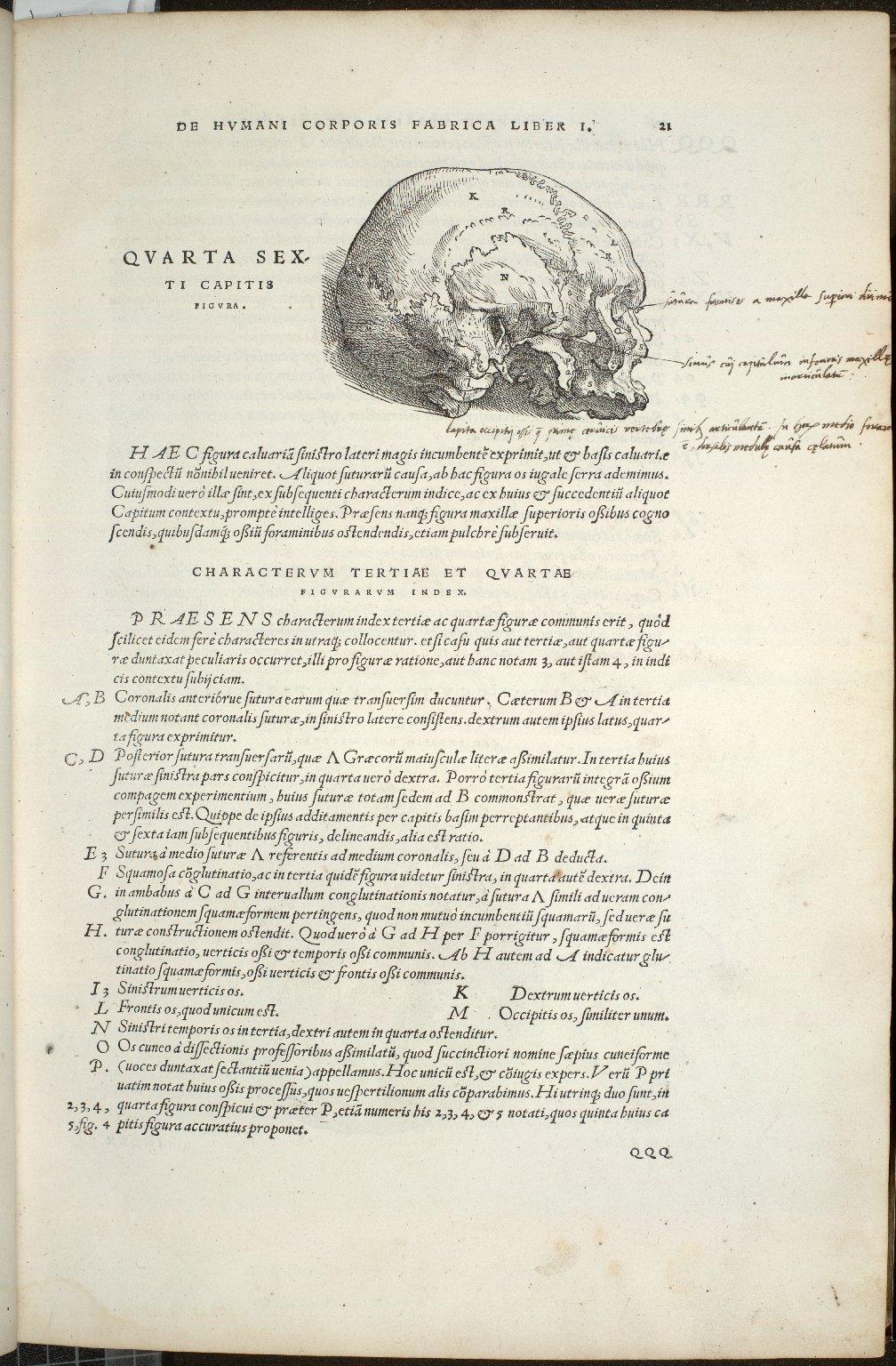 De Octo Capitis Ossibus et futuris haec commenttentibus. Caput VI. Fig: IV