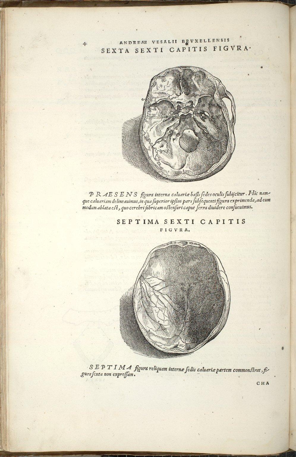 De Octo Capitis Ossibus et futuris haec commenttentibus. Caput VI. Fig.VI-VII
