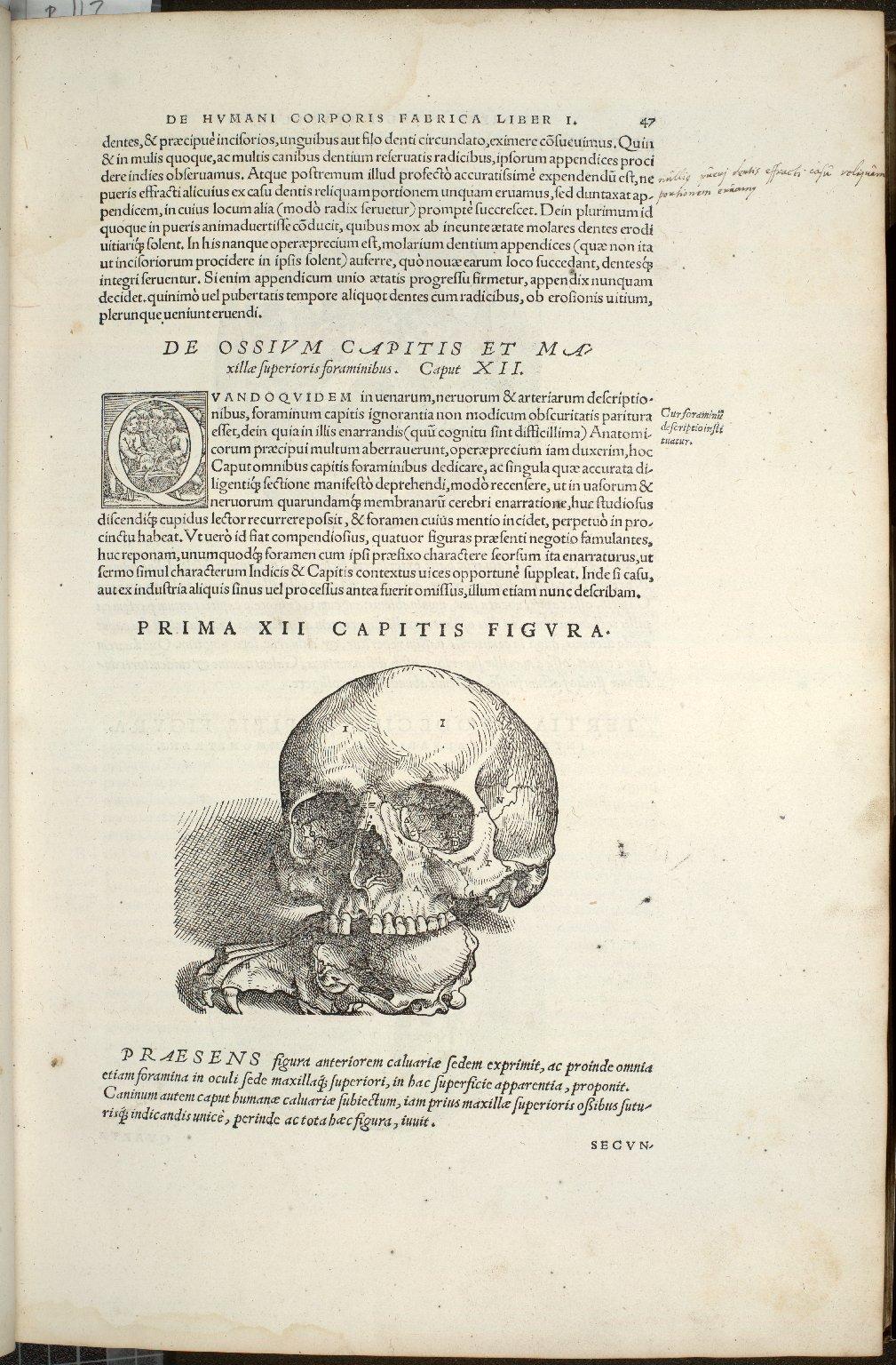 De Ossium Capitis et Maxillae superioris foraminibus. Caput XII. Prima Figura