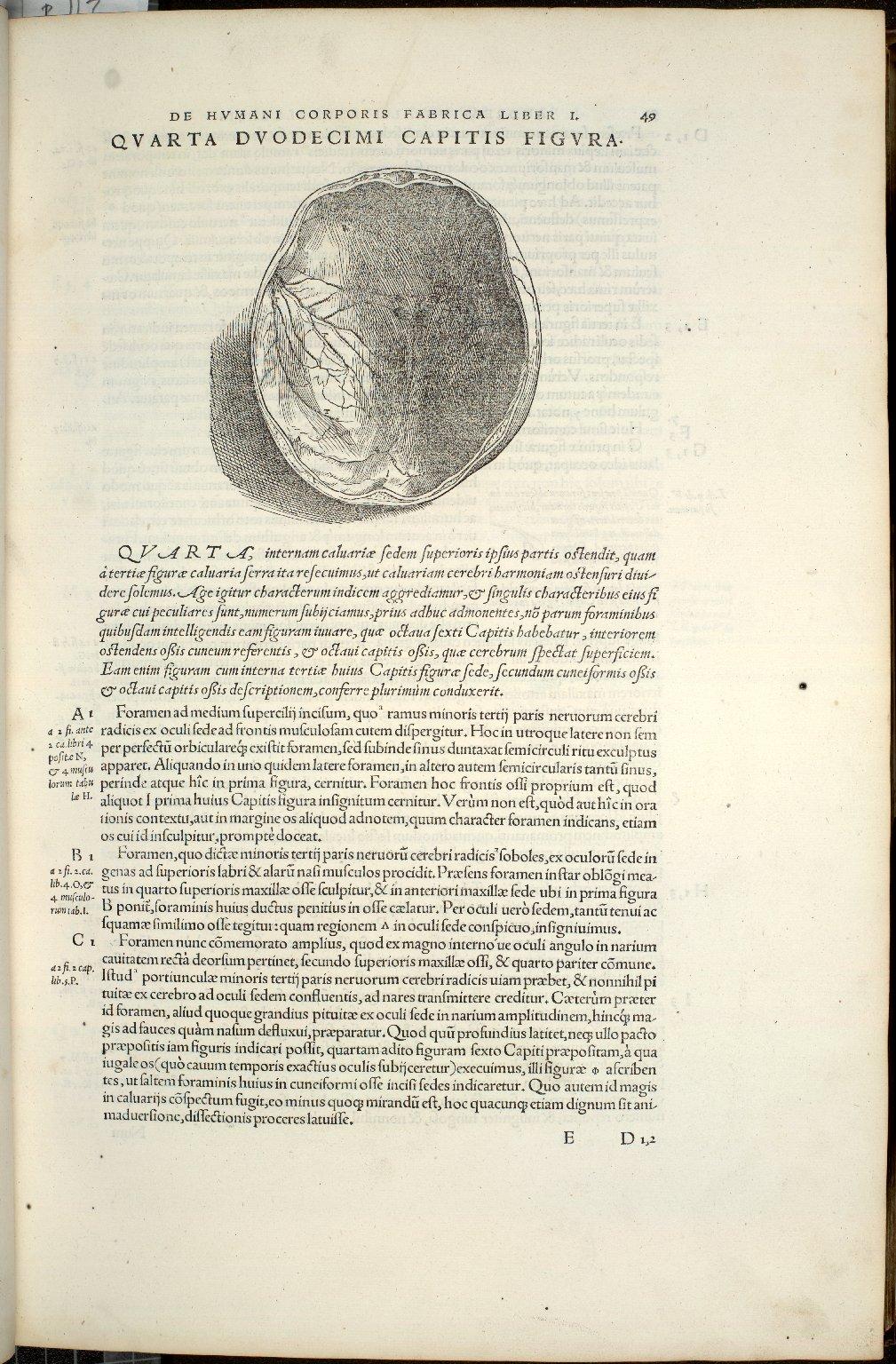 De Ossium Capitis Maxillae superioris foraminibus. Caput XII. Fig.IIII