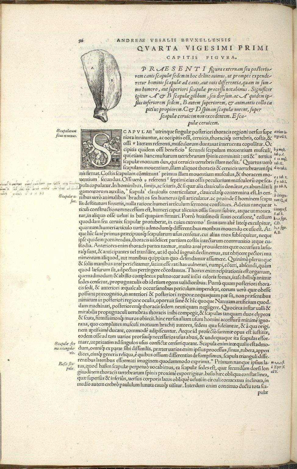 De Scapulis. Caput XXI. Fig.IIII