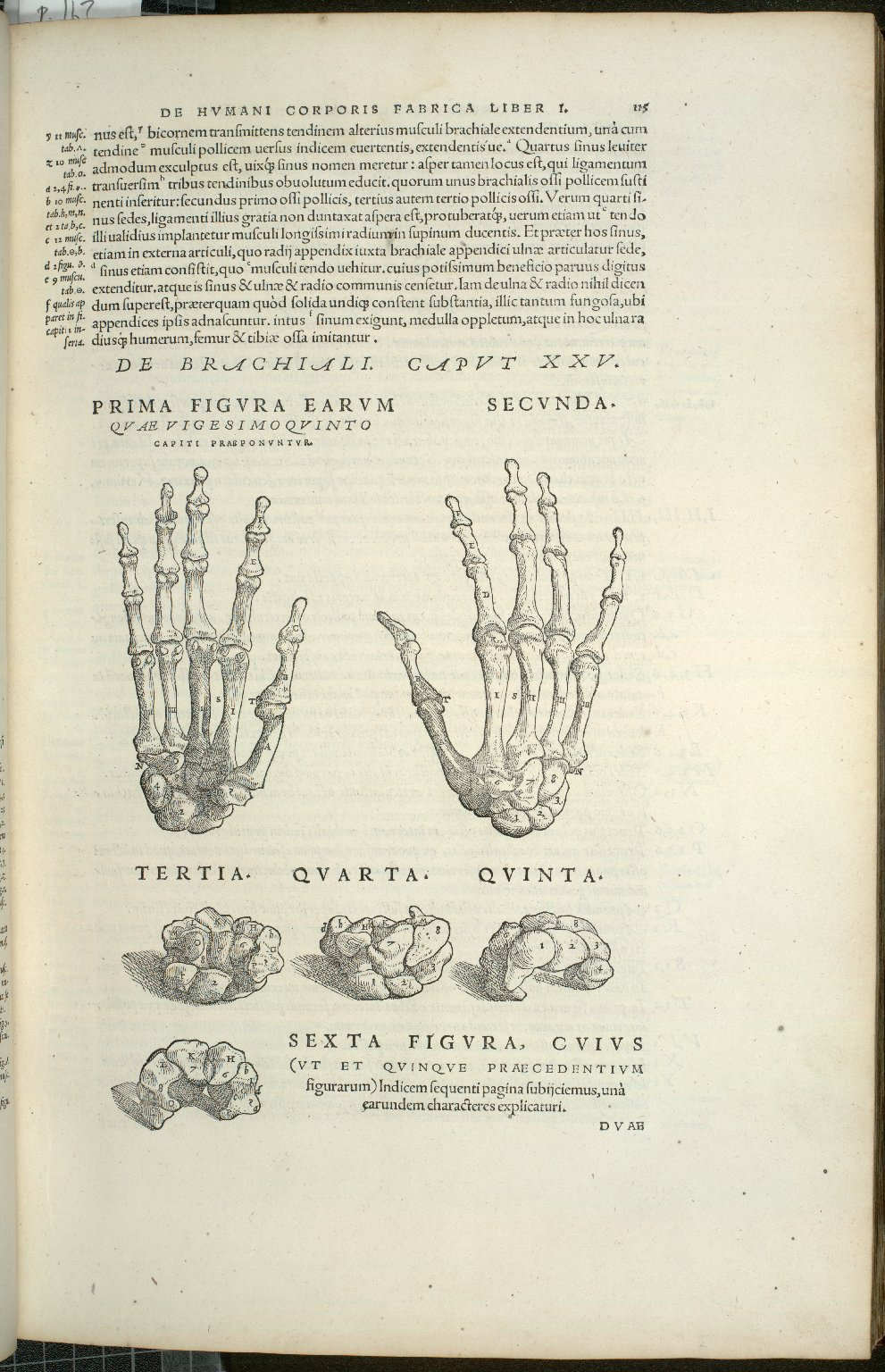 De Brachiali. Caput XXV. Fig.I-VI