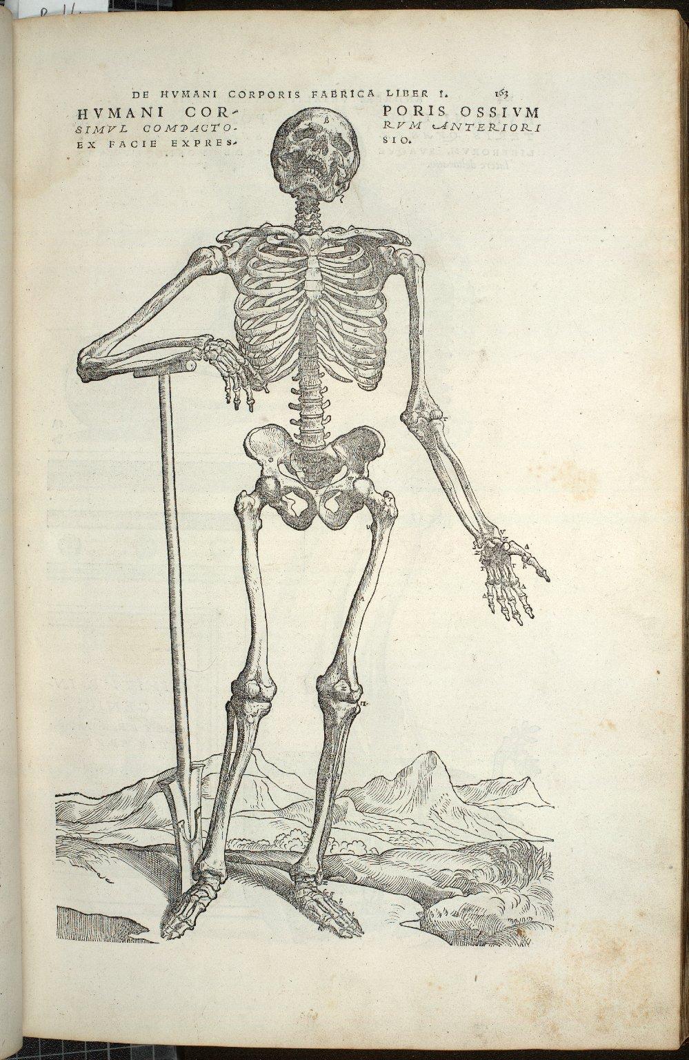 Humani Corporis Ossium Simum Compactorum Anteriori Ex Facie Expressio