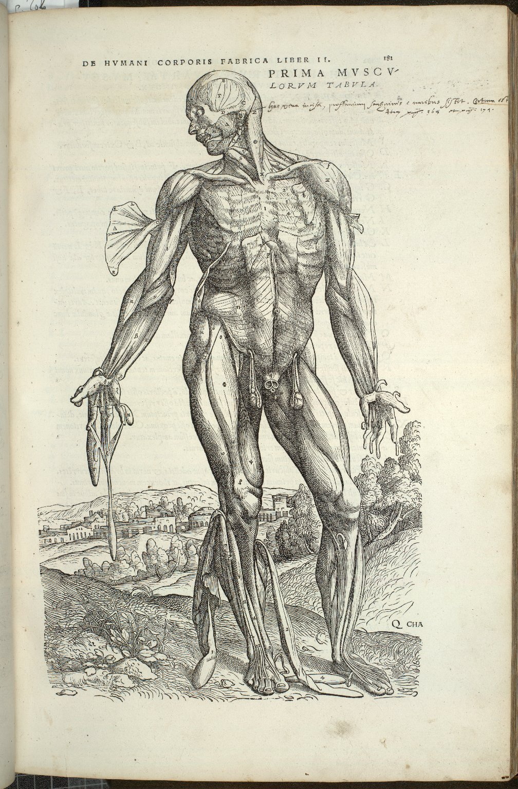 Prima Musculorum Tabula IV
