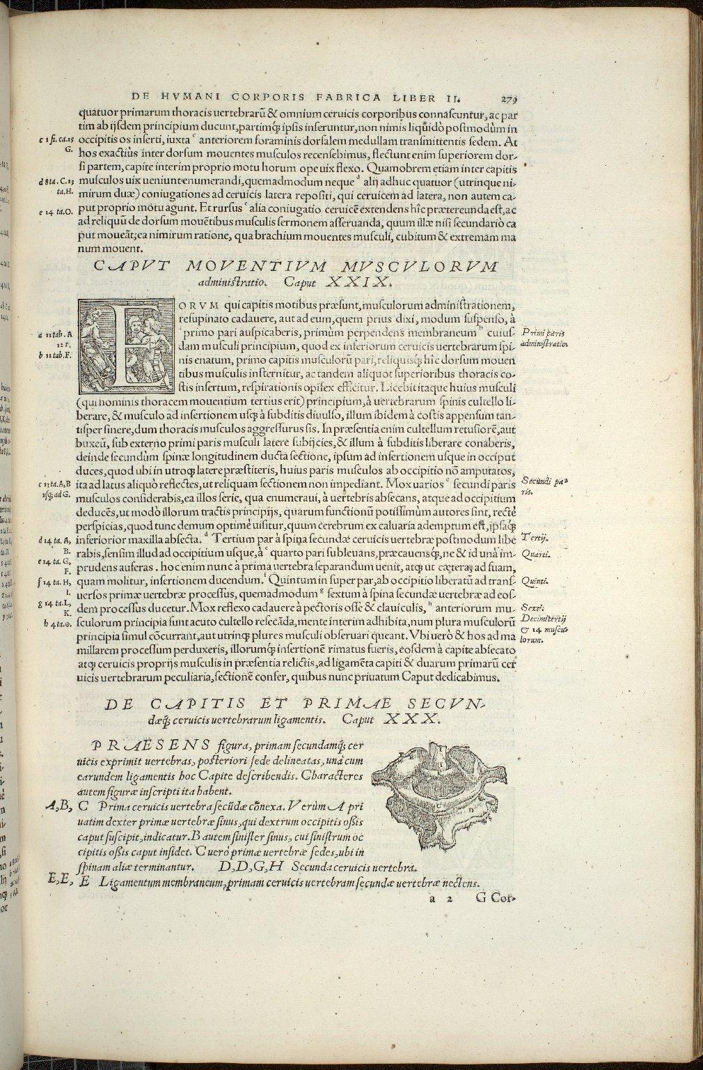 De Capitis et Primae Secundaeq cervicis vertebrarum ligamentis. Caput XXX.