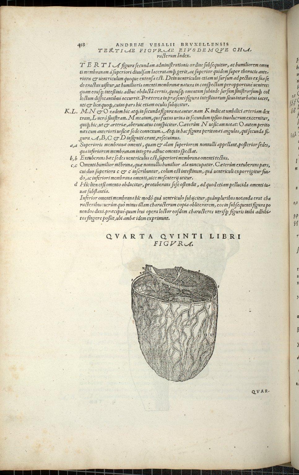 Organis Nutrition, Quarta Quinti Libri Figura.