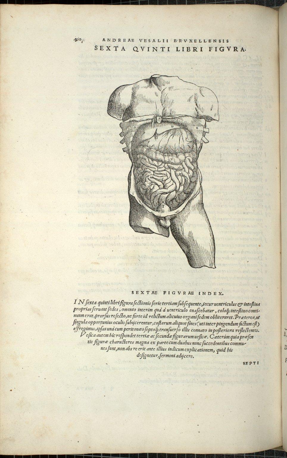 Organis Nutritioni, Sexta Quinti Libri Figura.
