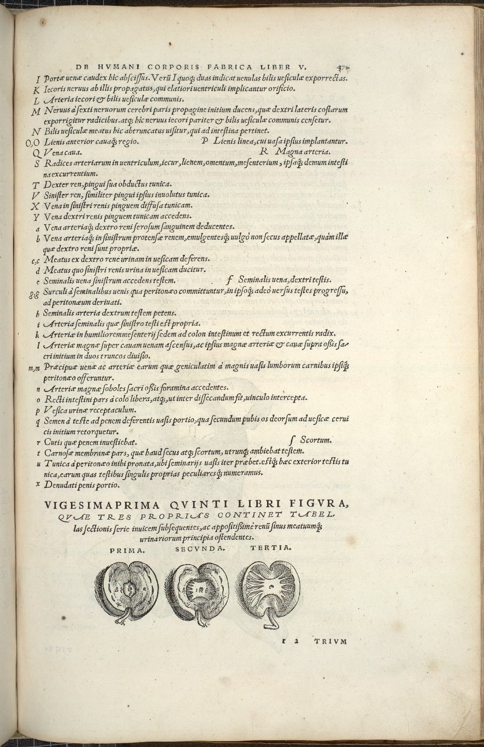 Organis Nutritioni, Vigesimaprima Quinti Libri Figura.