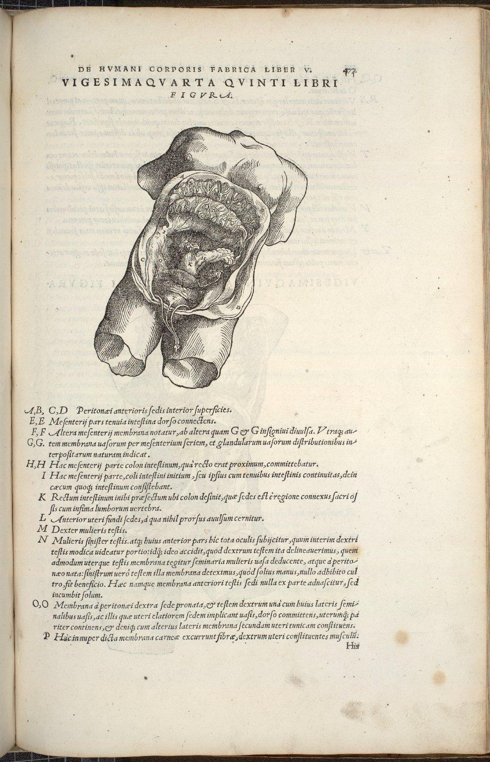Organis Nutritioni, Vigesimaquarta Quinti Libri Figura.