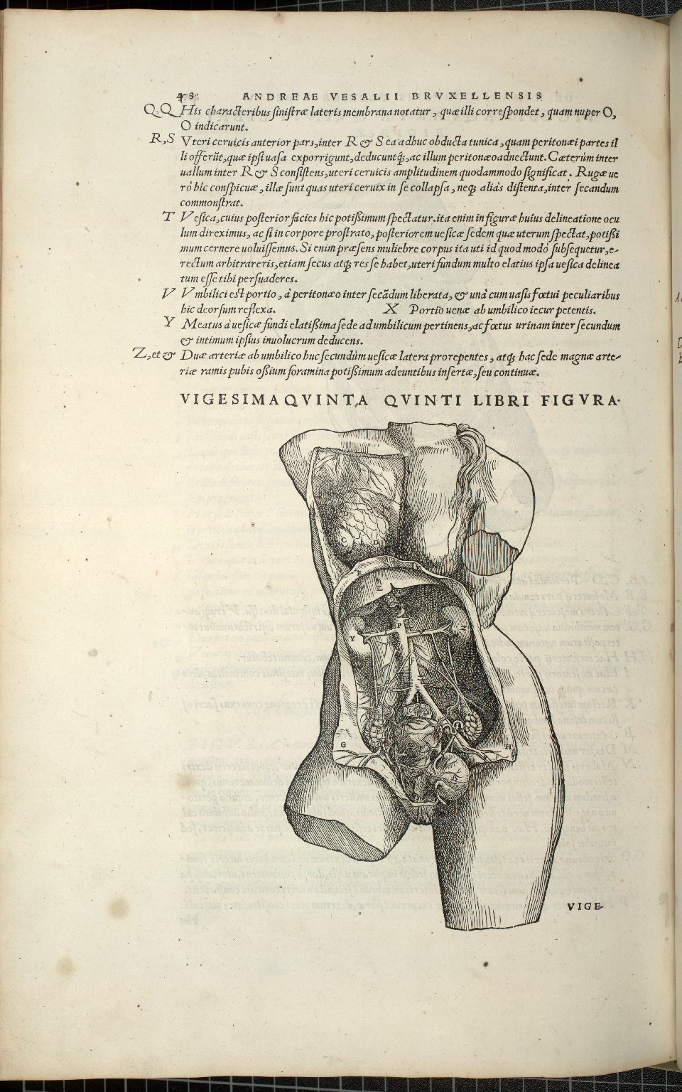 Organis Nutritioni, Vigesimaquinta Quinti Libri Figura.