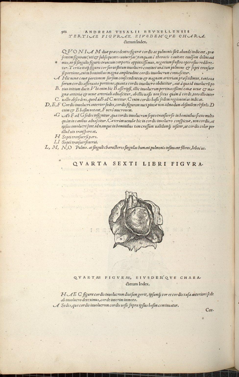 Quarta Sexti Libri Figura.