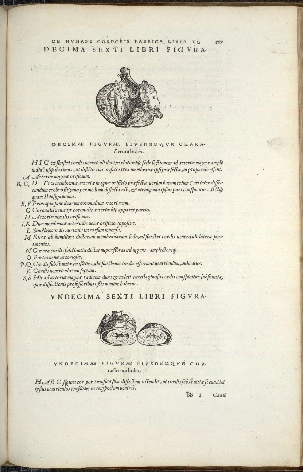 Decima Sexti Libri Figura, Undecima Sexti Libri Figura.